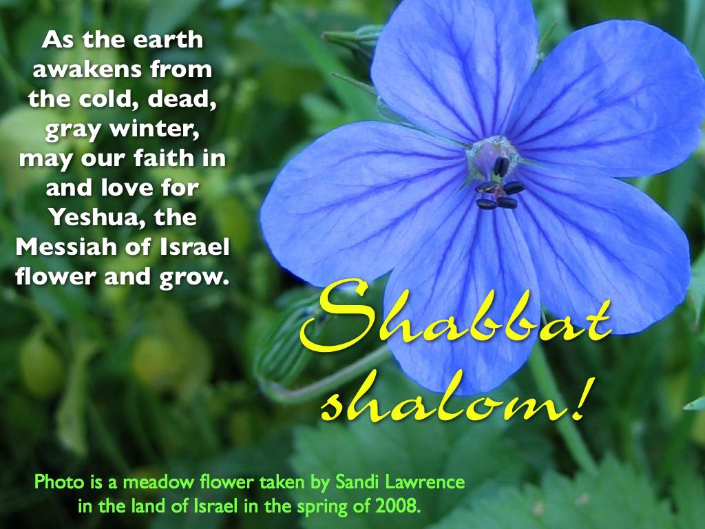 http://hoshanarabbah.org/blog/wp-content/uploads/2013/03/Shabbat-Shalom-Flower.jpg