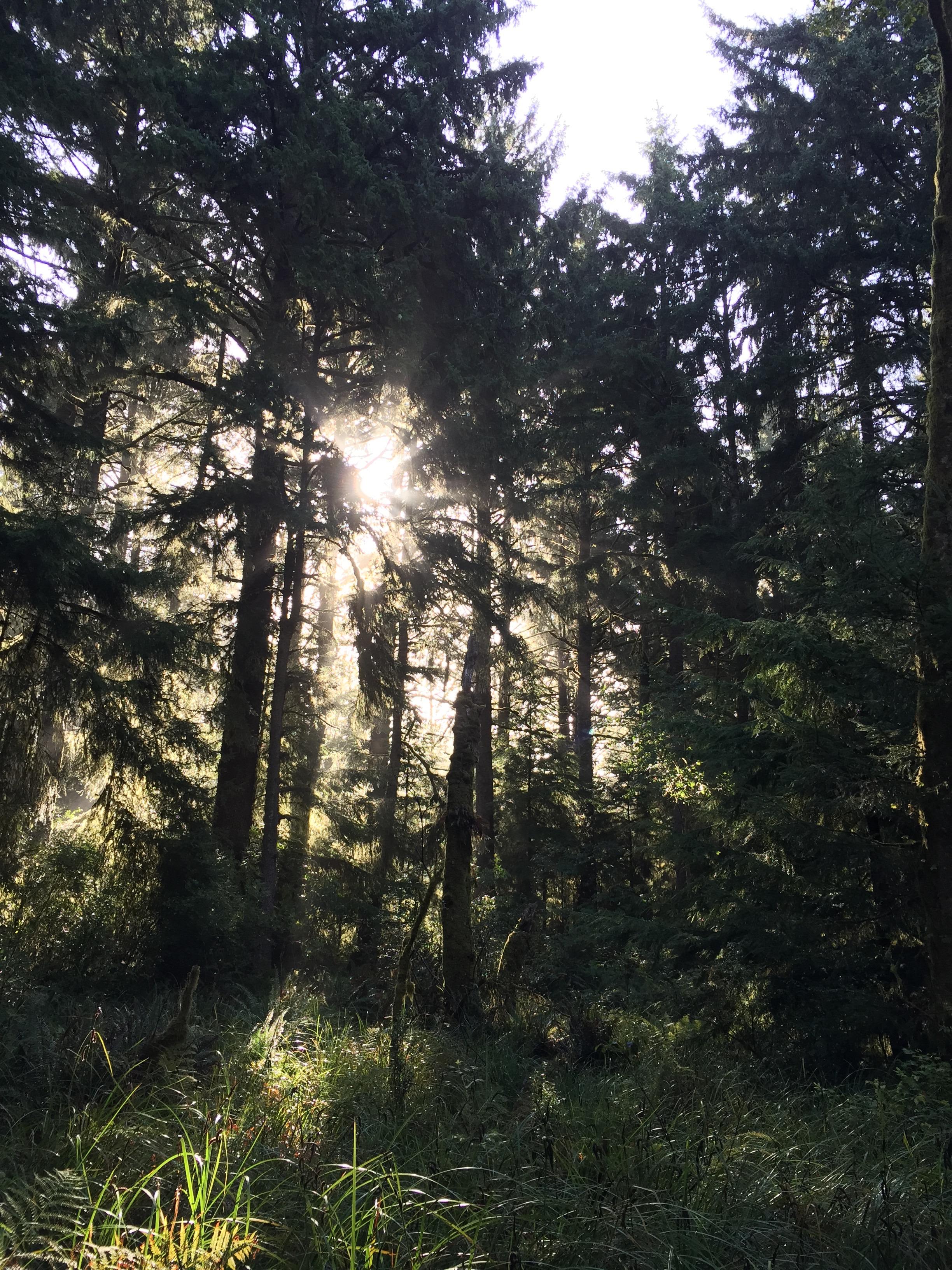 The sun shining through the trees.