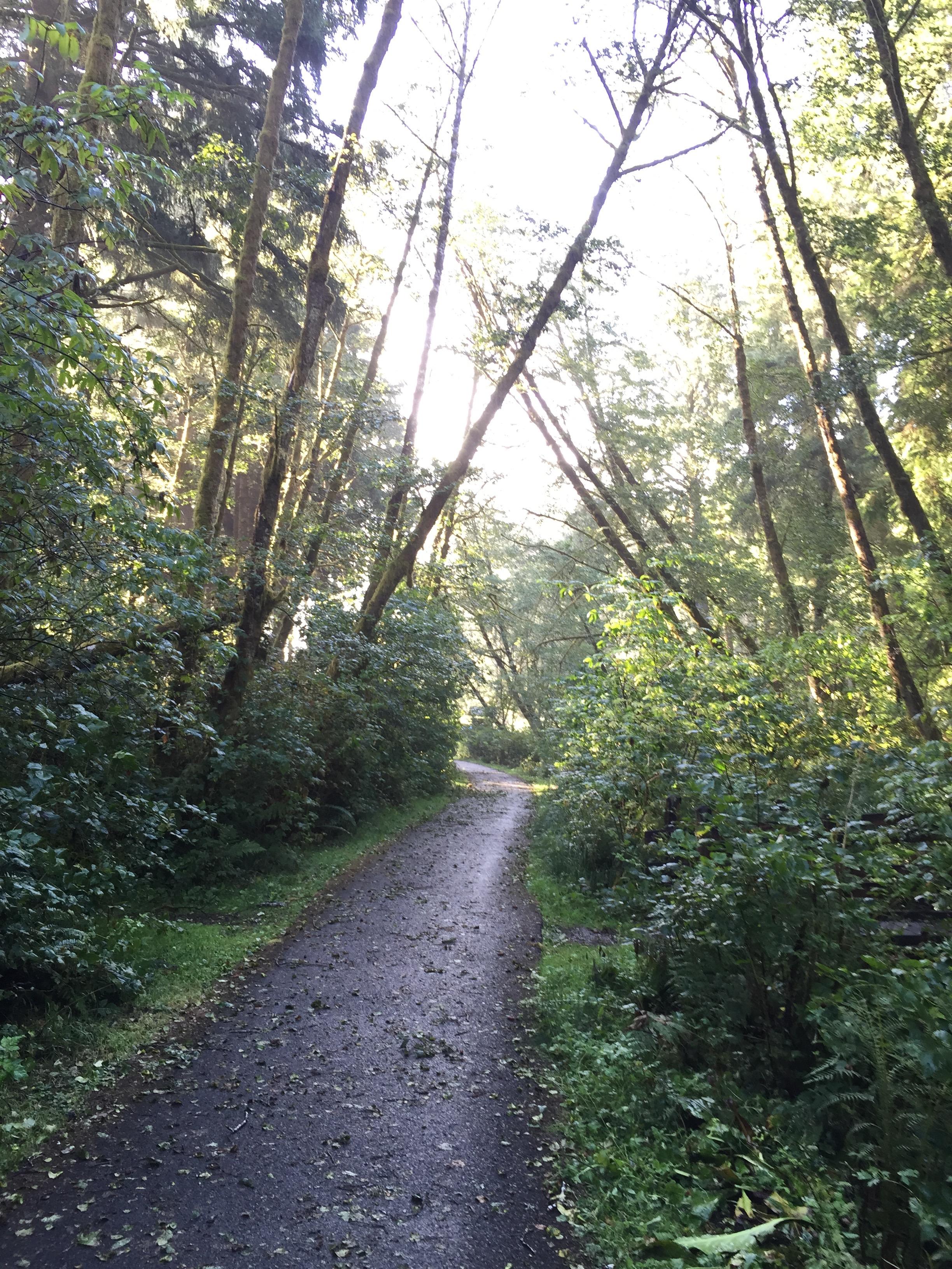 A phalanx of alder trees.