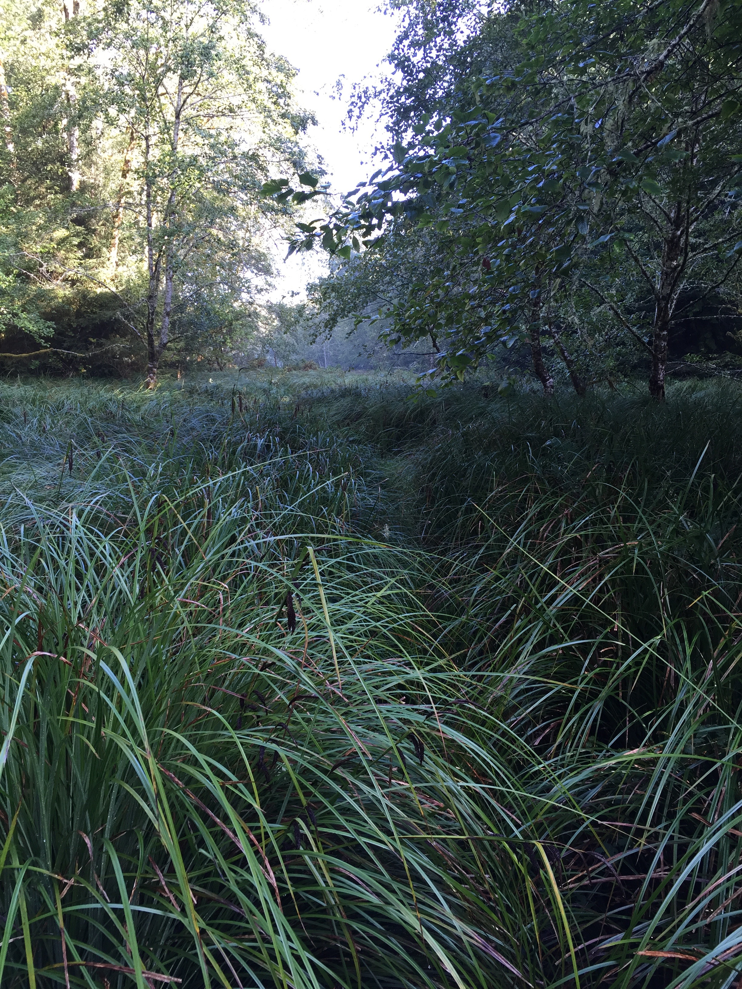 A meadow where the elk graze.