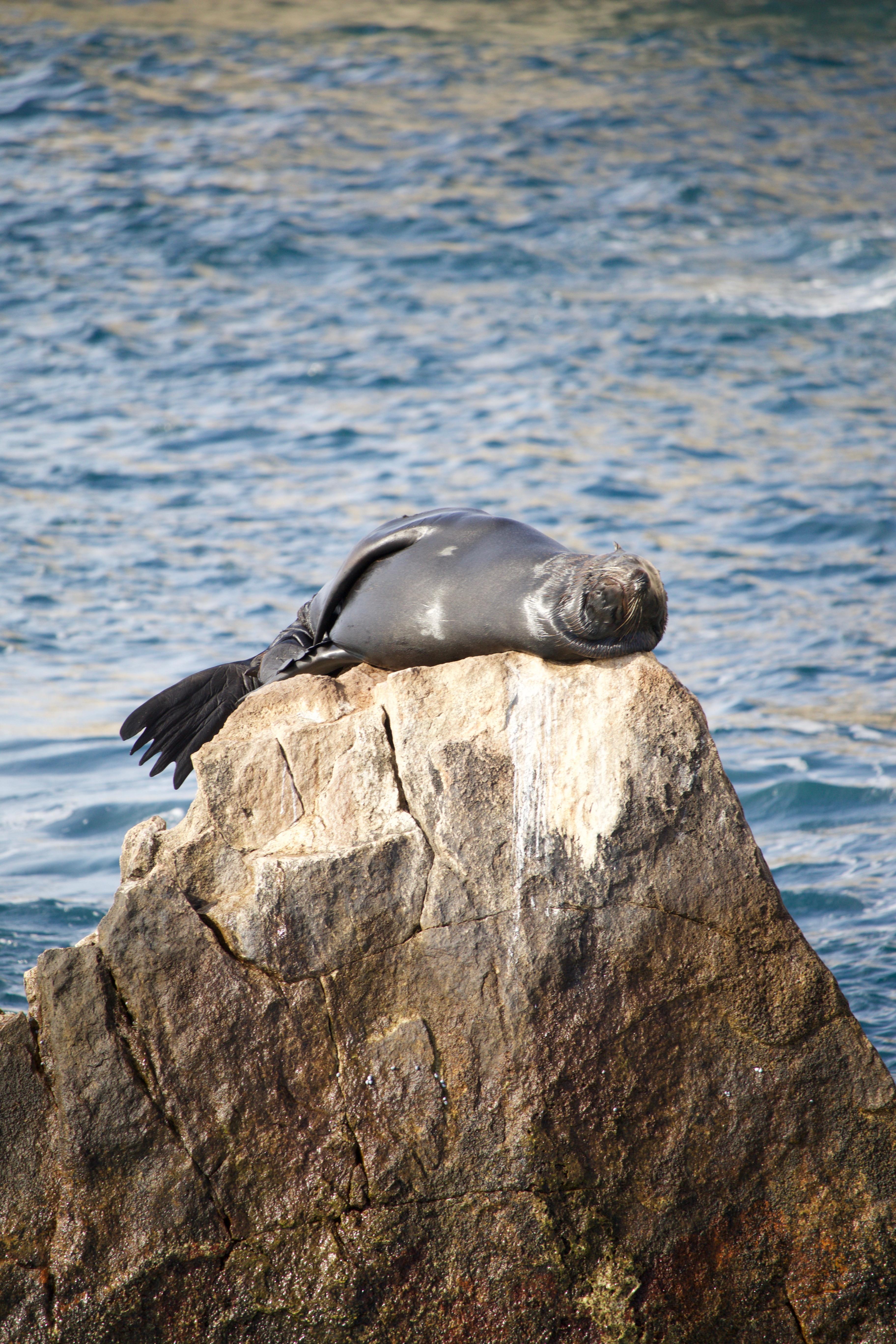 Animals Pics From Mexico Hoshana Rabbah Bloghoshana Rabbah Blog